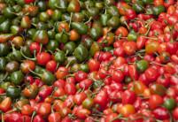 Jak se měří pálivost chilli papriček?