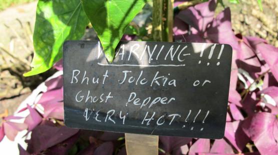 "Bhut Jolokia, ""ghost pepper"": Seznamte se!"